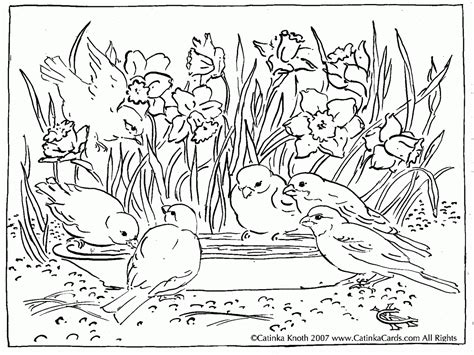 cardinal coloring pages preschool bird coloring pages dr odd solid surface vanity