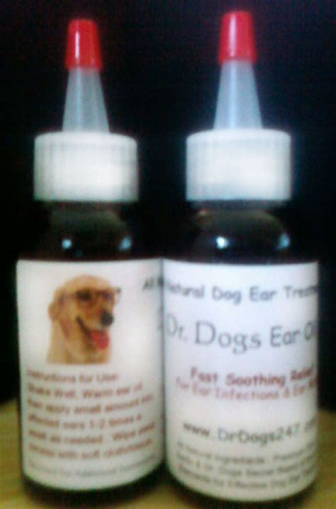 ear infection remedies for dogs dr dogs ear faq