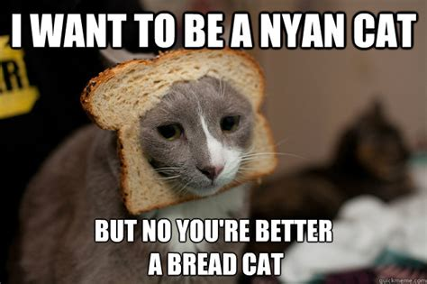 Cat Breading Meme - bread cat memes funny