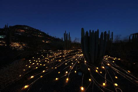 bruce munro field of light field of light artist uses 50 000 lights to turn desert