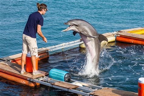 Find In The Navy Navy Dolphins Practice In Key West How To Find Mines In The Wgcu News