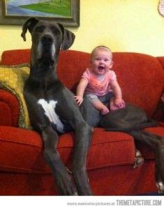 10 best big dog breeds for families babble pets 1000 images about animals large dogs on pinterest