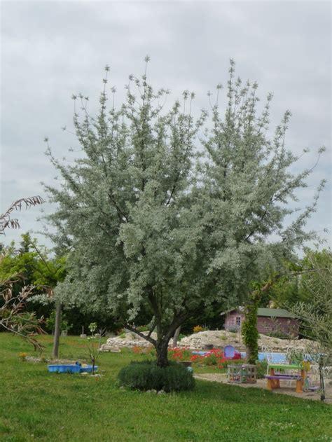 Olivier De Bohème Persistant olivier de boheme persistant 2 p 233 pini 232 re casse noisette