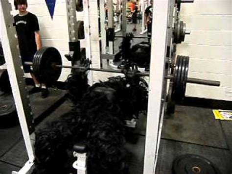 silverback gorilla bench press gorilla benching youtube