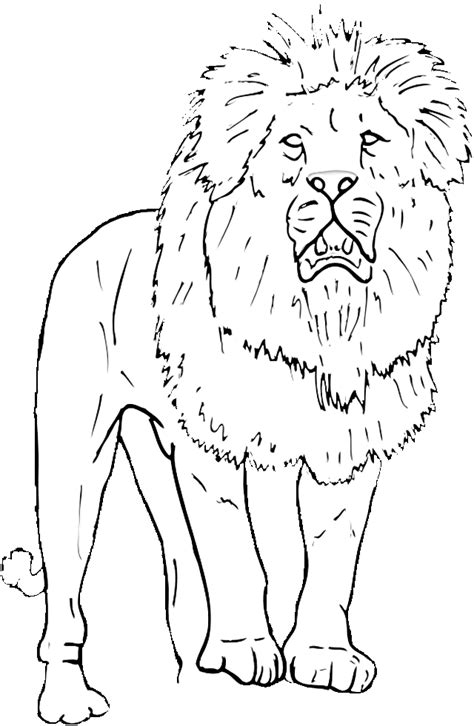 free coloring pages of wild animals free wild animals borders coloring pages