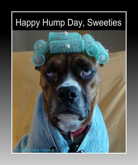Happy Hump Day Meme - 1000 ideas about hump day meme on pinterest happy hump