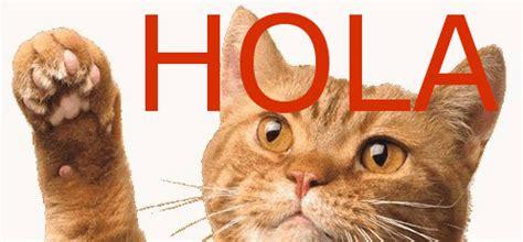 imagenes en movimiento saludos zoom frases gif con movimiento de gatito que saluda