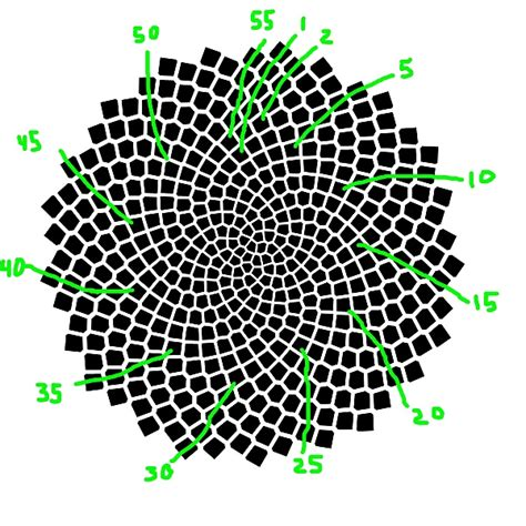 sunflower pattern coreldraw fibonacci numbers of sunflower seed spirals national