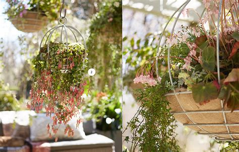 trailing hanging basket foliage plants 5 trailing plants for hanging baskets the at terrain