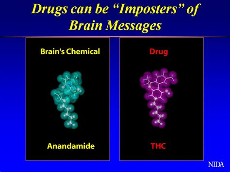 Does Affect Thc Detox by How Are Drugs Able To Affect Brain Chemicals National