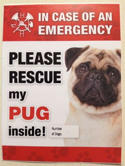 window stickers for house 25 best ideas about pug rescue on pinterest