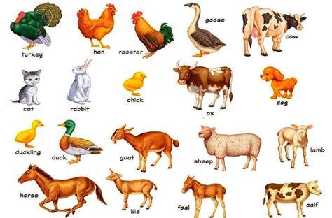 imagenes animales ingles dibujos con palabras de animales en ingles para ni 241 os