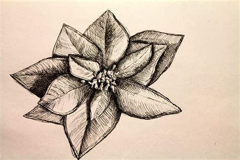 disegni a matita fiori disegni di fiori a matita xa79 187 regardsdefemmes