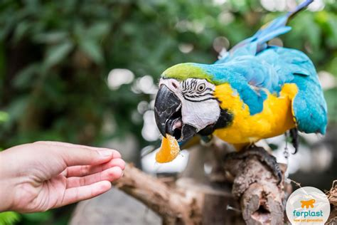 the parrot doesn t want to eat how do you change his diet