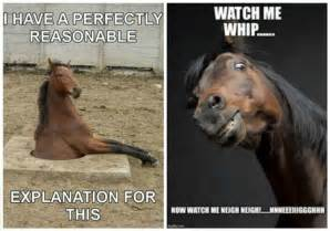 Funny Horse Memes - funny horse memes