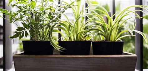piante e fiori da terrazzo piante da balcone piante e fiori per un balcone perfetto