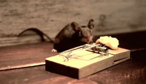 eye of the tiger mouse commercial nolan s cheddar mouse the inspiration room