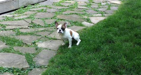 most effective way to potty a puppy puppy potty tips canine peace of mind