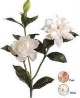 Tanaman Jempiring Gardenia must deden site s