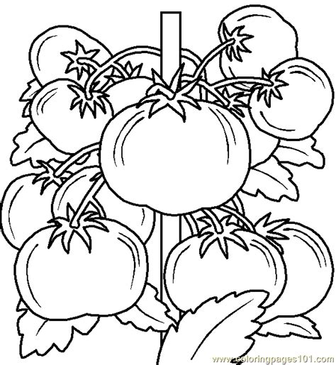 Coloring Pages Vegetable Coloring Page 06 Food Fruits Free Printable Vegetable Coloring Pages