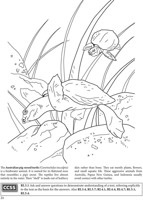 indonesian animals coloring pages 94 indonesian animals coloring pages orangutan