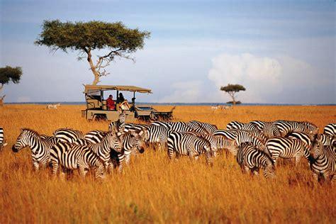 In Kenya kenya masai mara big 5 safaris and masai culture