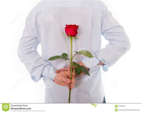 man holding  single red rose    royalty