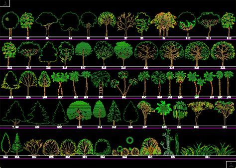 Trees and Shrubs 2D DWG Elevation for AutoCAD ? Designs CAD