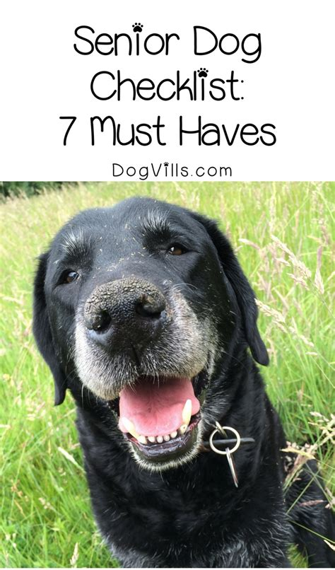 puppy must haves senior checklist 7 items to keep on dogvills