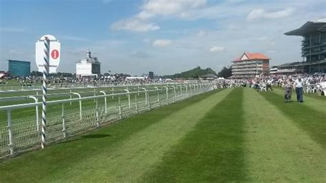 york racecourse day at the knavesmire picture of york racecourse