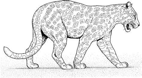 imagenes de un jaguar en caricatura panth 232 re 51 animaux coloriages 224 imprimer