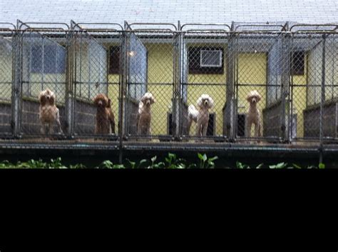 kennels near me alpine kennels pet boarding pet sitting hummelstown pa united states photos yelp