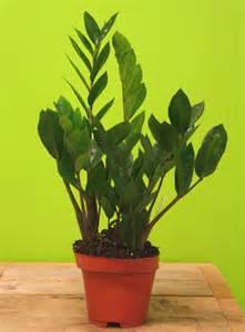 plantes tropicales d interieur