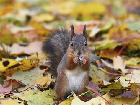 animal seasons squirrels autumn 1848358784 美しい世界の季節 秋 world beautuful seasons autumn