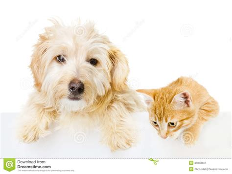 cat and puppy cat and above white banner stock image image 35083637