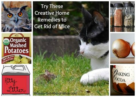 home remedies to get rid of mice
