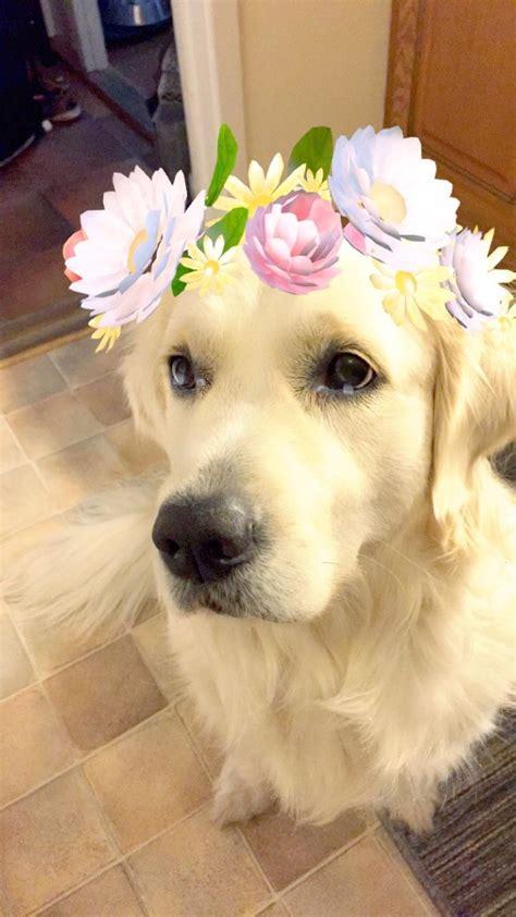 bluescrgnt     flower filter   dog