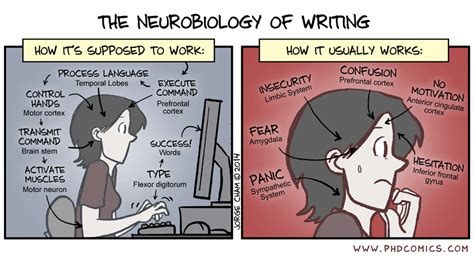Essay Writing On Comics by Phd Comics The Neurobiology Of Writing