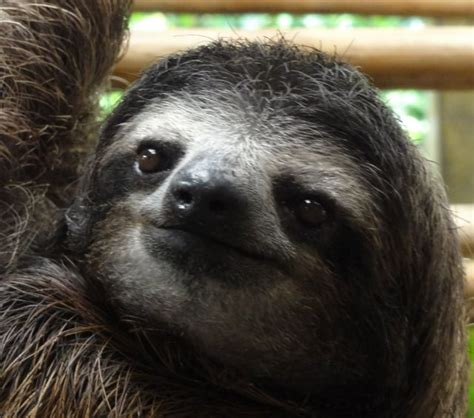 be a sloth ebook warning the cuteness might your mind sloth photo