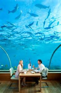 ithaa undersea restaurant pics photos hilton maldives ithaa undersea restaurant