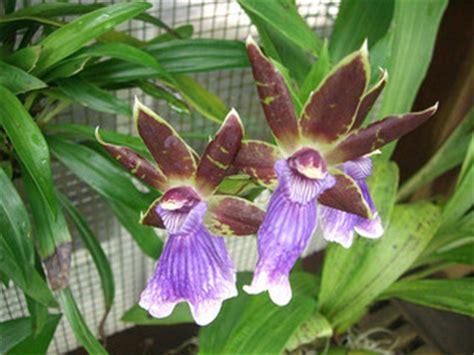 Biotic Garden Biotic Factors Tropical Forest
