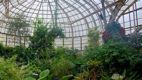 lincoln park conservatory in chicago illinois expedia