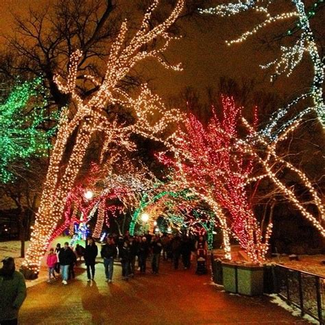 lincoln park zoo christmas lights 17 best images about calgary zoo lights on pinterest