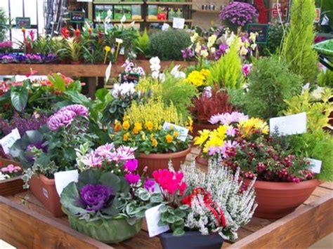 vivai piante e fiori fiori e piante la fraterna isernia 11 v s ippolito