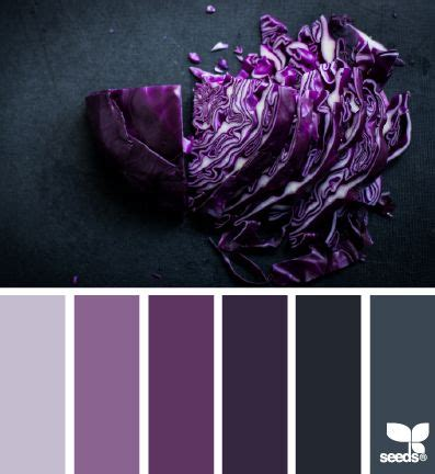 hues of purple chopped hues design seeds cabbages design and paint