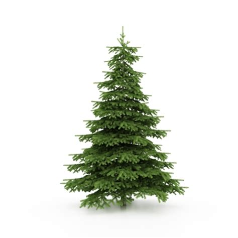 Ikea Gif by Pine Trees Around Christmas Get A Clue About Conifers