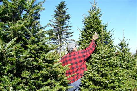 christmas tree preparation tree lights safety tips from nfpa ups battery center