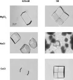 hydration journal hydration and hydrodynamic interactions of lysozyme