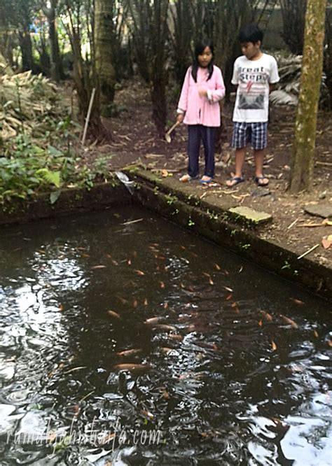Ikan Nila Kecil lebaran kemarin a moment to remember part 2 rumah