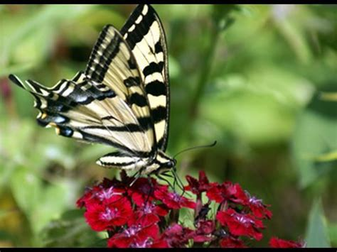 flower garden with butterflies flower garden butterfly garden